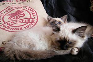 Foto de dois gatos